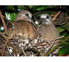 Our Baby Pigeons Photographic Print