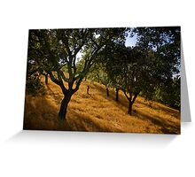 The Cork Trees of Alportel Greeting Card