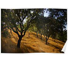 The Cork Trees of Alportel Poster