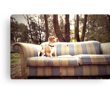 Dog in the Woods Canvas Print