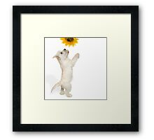 Westie Pup and Sunflower Framed Print
