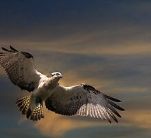 On The Fly by byronbackyard
