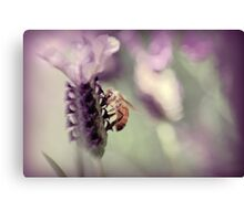 Bee in Lavender II Canvas Print