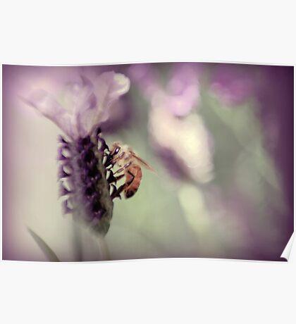 Bee in Lavender II Poster
