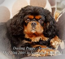 Goodbye Sweet Poppy by AnnDixon