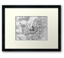 Painted Lady Butterfly Sketch Framed Print