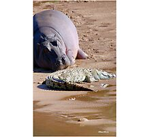 FRIENDS FOR......EVER, WITH MY SIZE... YES! - the Hippo's and the Crocodiles Photographic Print