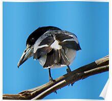 Grey Butcher Bird ~ Western Australia Poster