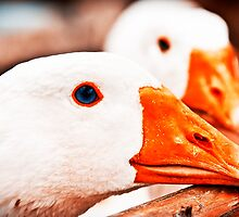Geese. by tutulele