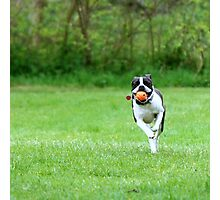 Fetch! Photographic Print