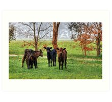 Calves in the Mist Art Print