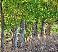 Trees by Savannah Gibbs