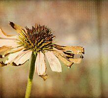 The Harsh End of Summer by KBritt