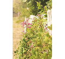 Overgrown Fence Photographic Print