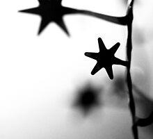Winter Stars by timkirman