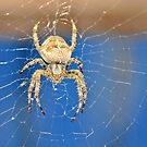 Spider Spider by Lynda   McDonald