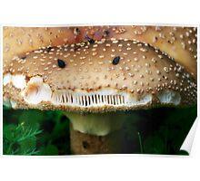 Angry Mushroom Poster