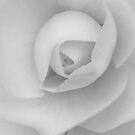 Begonia by SunDwn