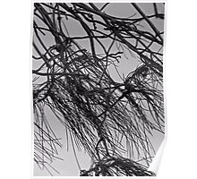 Branches BW Poster