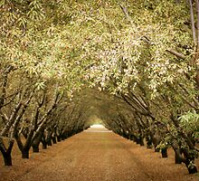 Almonds In Abundance  by SarahSandoval