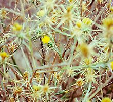 Beauty Among Thorns by SarahSandoval