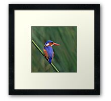 Another Splash of Colour..... Framed Print