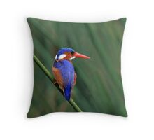Another Splash of Colour..... Throw Pillow