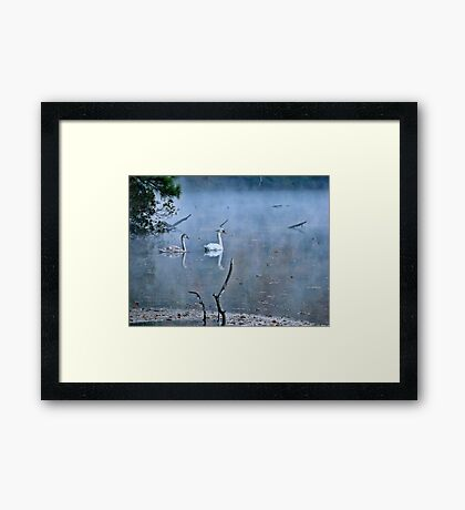 Swans on a Foggy Morning Framed Print