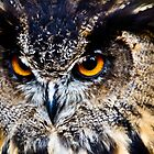 Angry Owl by adamshortall