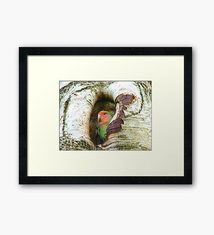 Umm!! Should I Be Collecting Nuts? - Love Bird - NZ Framed Print