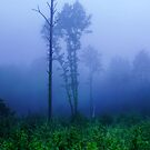 Foggy symphony in forest by Antanas