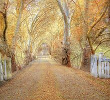 Colours of Autumn - Blakiston, The Adelaide Hills, SA by Mark Richards