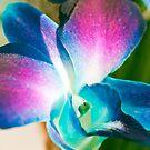 Mystical Orchid.  by Sherstin Schwartz
