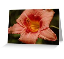 Peach Lily Greeting Card