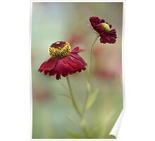 Heleniums Poster