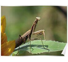 Mantis In The Garden Poster