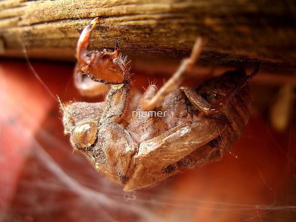 Cicada Skin by njumer
