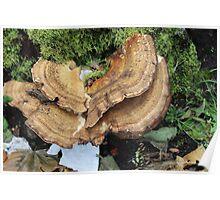 Large Mushroom Poster