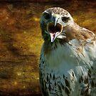 Bird of prey by laurav