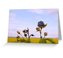 Bluish blackberries berries Greeting Card