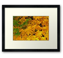 Yellow fall foliage Framed Print