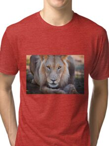 expressive looking male lion Tri-blend T-Shirt