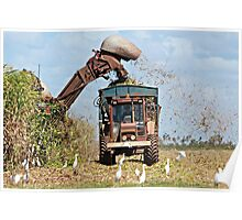 Cane Cutting Poster