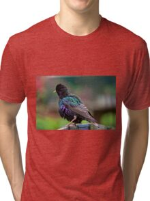Darling Starling Tri-blend T-Shirt