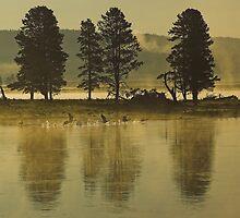 Golden Hour by Tamas Bakos