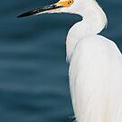 Snowy Egret by Michael Mill