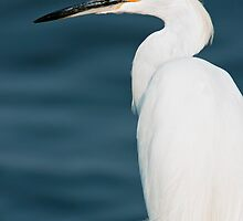 Snowy Egret by Michael Mill