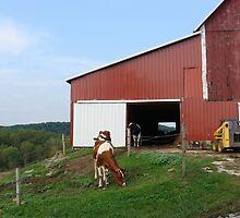 The Cow Barn by vigor