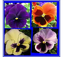 Four Cute Little Pansy Faces Collage Photographic Print