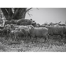 Country Australia Photographic Print